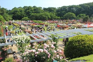 Ikuta-Ryokuchi Rose Garden / 生田緑地ばら苑