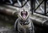 Un gatto è un leone in una giungla di piccoli cespugli. (Proverbio Indiano)