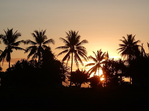 tuvalu funafuti classic tropical palms silhouette sunset