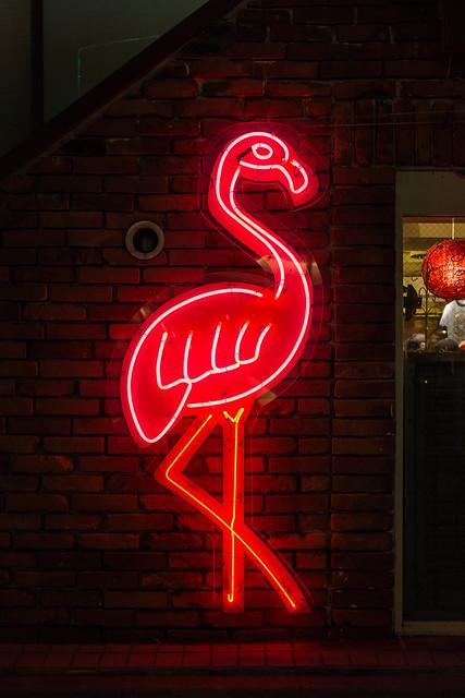 20130501_01_Neon Flamingo