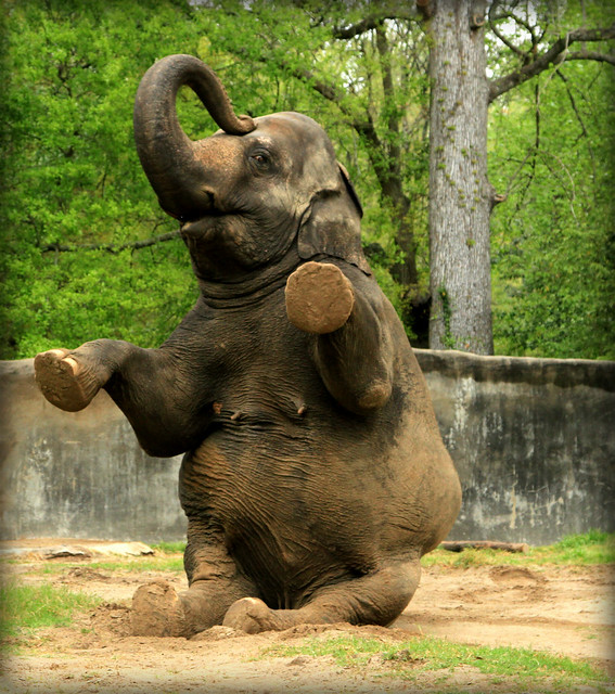 Baton Rouge Zoo: Geaux Wild