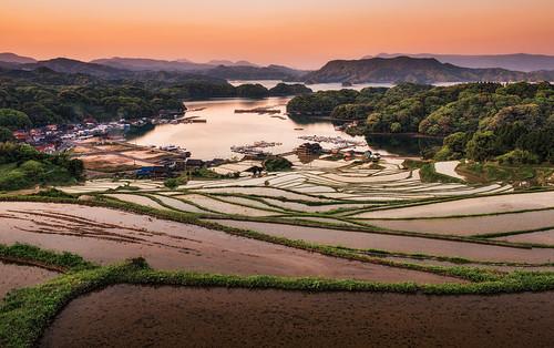 morning plants japan sunrise season spring rice saga ricefields riceterraces kyushu karatsu 佐賀 tanada 2013 sagaprefecture arcreyes 大浦の棚田