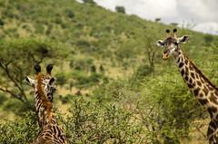 Tanzania-Serengeti-MbuziMaweSafariDrive-14