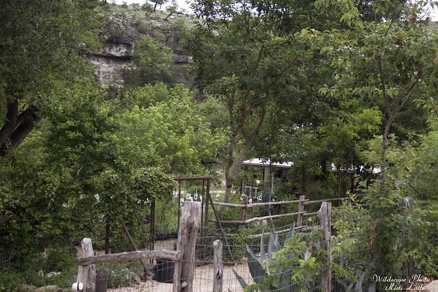 Natives of Texas Nursery, Kerrville, Texas