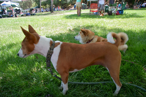The Bows make an appearance at the Shiba Picnic, 2013