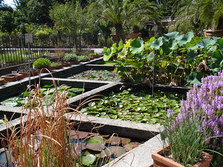 Bild von Orto Botanico di Padova. veneto italië september herfst 2016 1001tuinen 1001gardens unescowerelderfgoed botanischetuininpadua