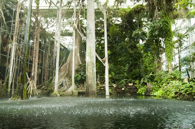 Muzeul stiintei - Padure Amazoniana / Amazonian Rainforest