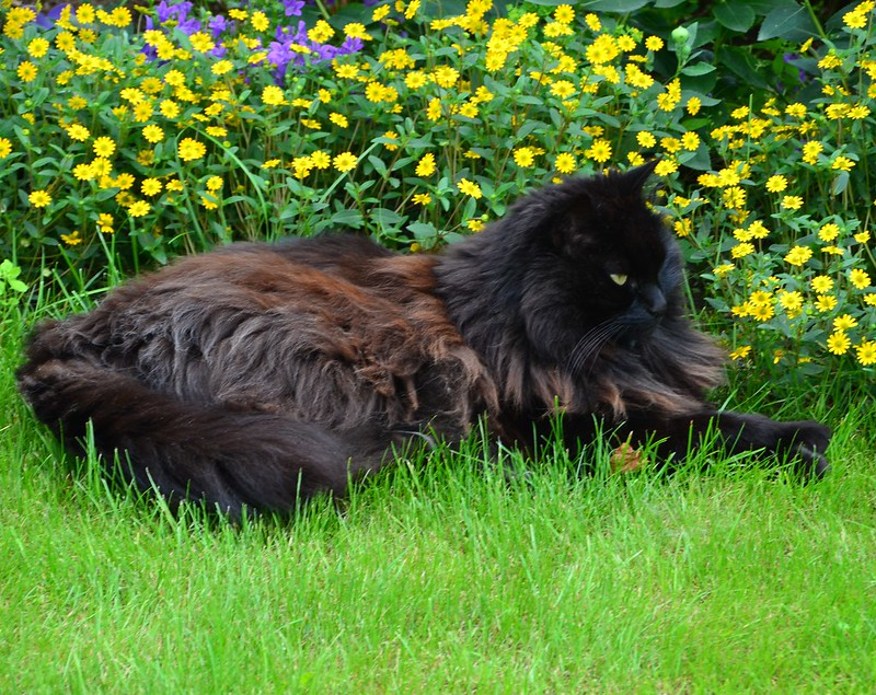 Nera in the flowers