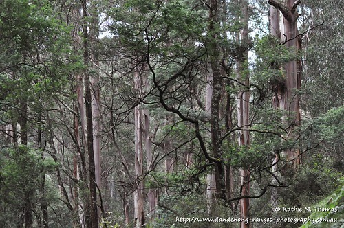 Visit to Sherbrooke Forest