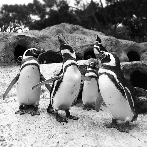 The #penguins have so much to say! by anthonybrown