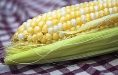 vegetable(0.0), plant(0.0), produce(0.0), dish(0.0), crop(0.0), sweet corn(1.0), food grain(1.0), maize(1.0), corn on the cob(1.0), food(1.0), corn on the cob(1.0), cuisine(1.0),