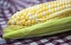 A kukorica termesztése