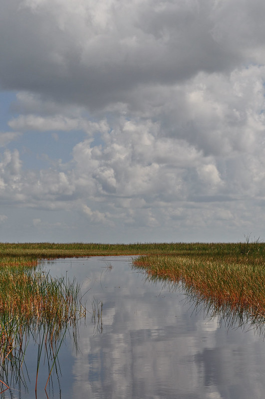 Everglades (12)