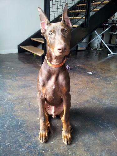 Clifford 5 months