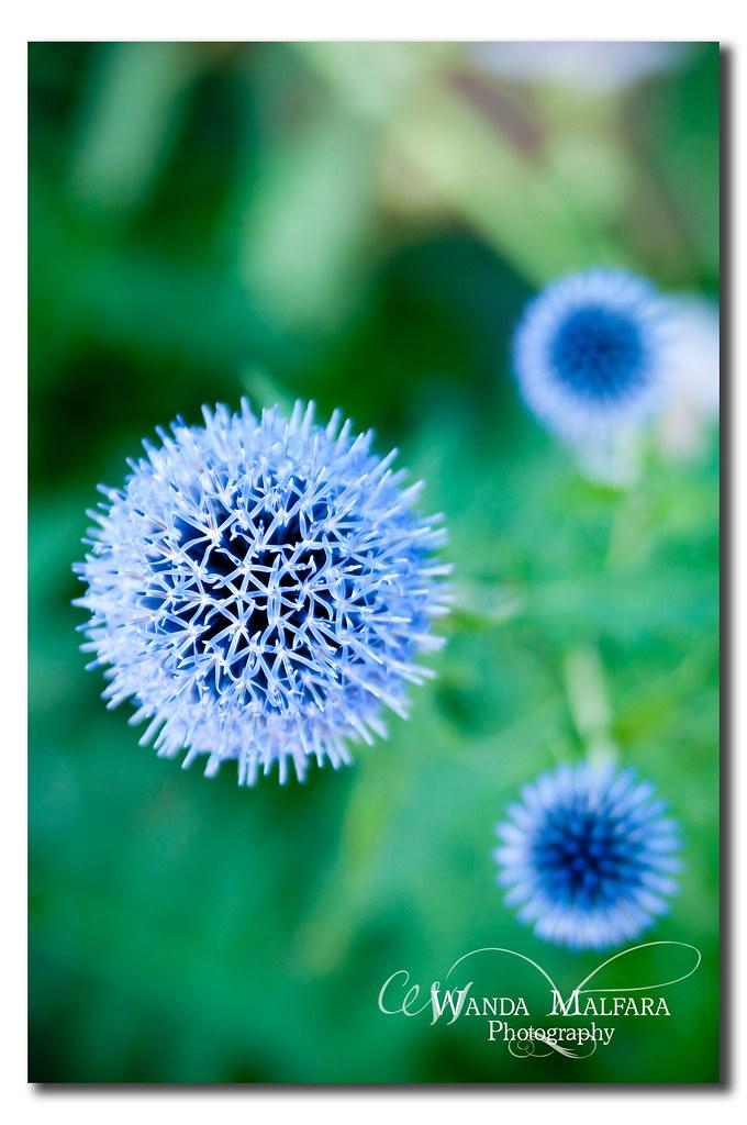 Flowers 137 wm