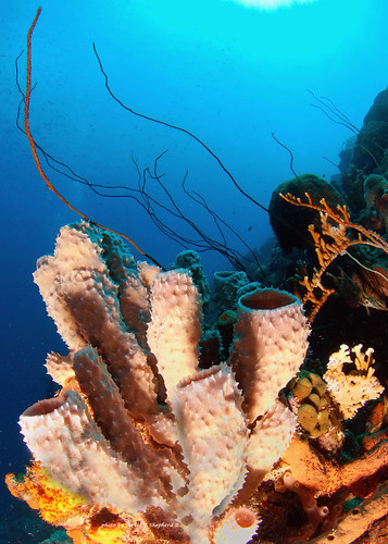 sea coral underwater bonaire sponges thegalaxy ©allrightsreserved snellswindow madaleundewaterimages me2youphotographylevel1
