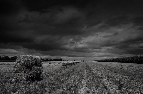 Bottes de paille sous un ciel orageux Paysage NB