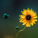 flower 7_24 by mondayshift