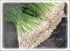 Cymbopogon citratus (Lemongrass, Barbed Wire Grass, Citronella Grass) at market in Hat Yai, Southern Thailand