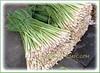 Cymbopogon citratus (Lemon Grass, Lemongrass, Barbed Wire Grass, Citronella Grass, Silky Heads, West Indian Lemongrass, 'Serai' in Malay)