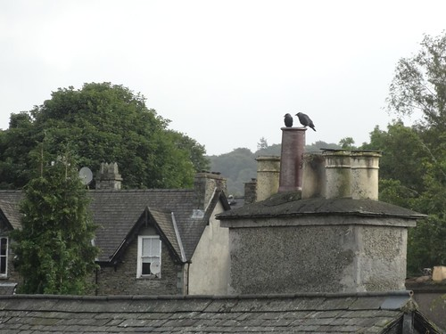 Rooks and Chimney pots in Windermere