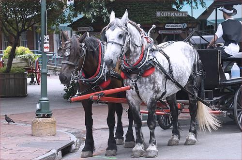 City Market Carriage Ride Tours -- Savannah (GA) July 2012