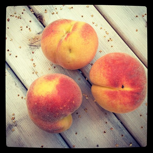 Home. Grown.  We have a bumper crop of yellow peaches this year. #eatlocal #cityfruit #citygardening #seattle