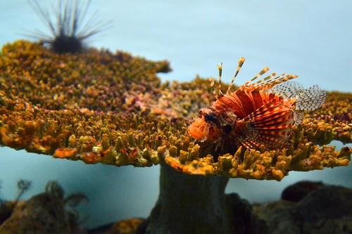 2012夏日大作戰 - 鹿児島 - かごしま水族館 (15)