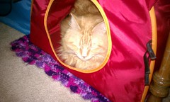 Jasper in his Ikea cat tent