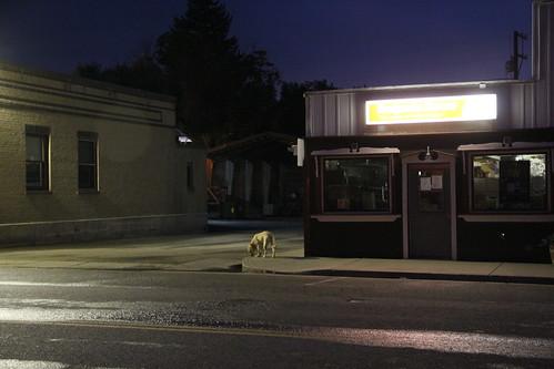 street sunset dog evening town colorado dusk small collbran