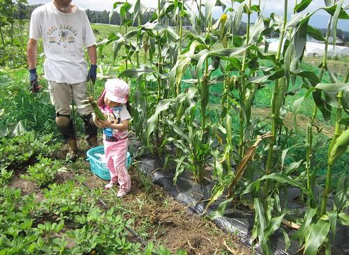 トウモロコシを持つ孫娘 2012年8月13日 by Poran111