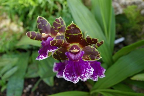 Kew_Gardens-003