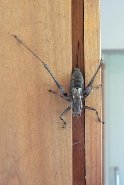 Massive bug