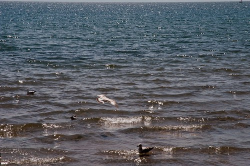 Water and Gulls