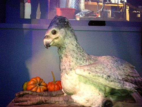 Buckbeak…they even had him in action!