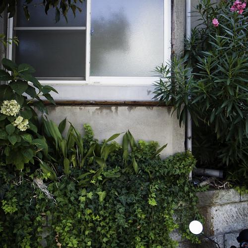 Window Oleander Ebisu, Tokyo