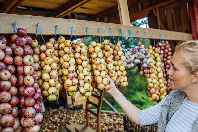 Kostja onion farm
