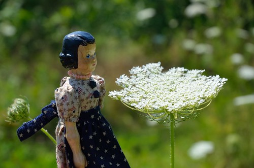 HItty Grace and Queen Anne's Lace