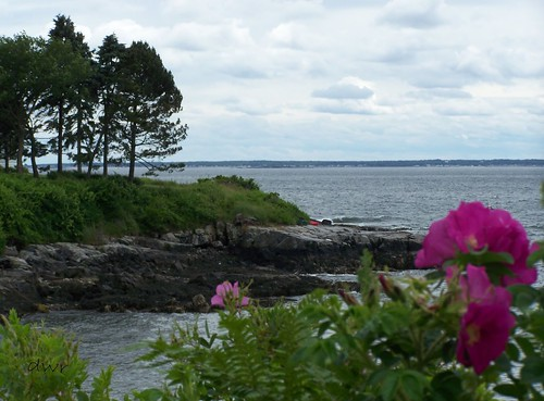 flowers maine waterscape flowersplant