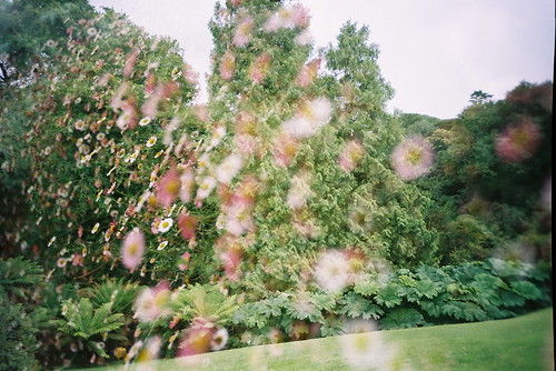 Multiple Exposure Flowers and Trees