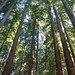 Henry-Cowell-2012-07-15
