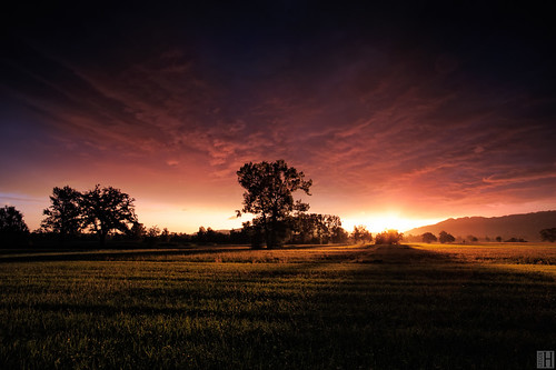 morning panorama tree reed field clouds sunrise landscape austria shadows inferno rheintal gloaming lauterach carlzeiss vorarlberg zf distagont3518 zeissphk12
