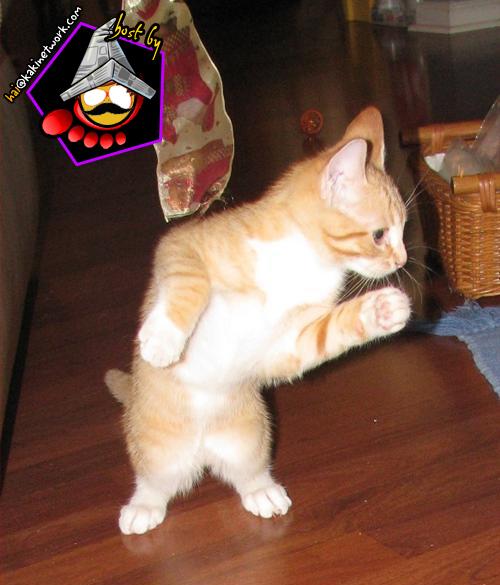 gambar kucing 03