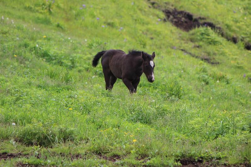 納沙布岬に行く途中に馬 その2