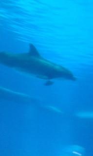Dolphin Gliding