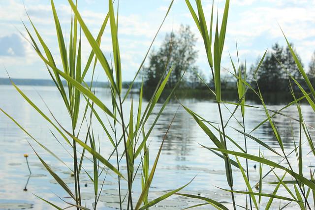Johannan mökillä 2012 091