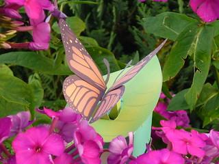 Butterfly paper model