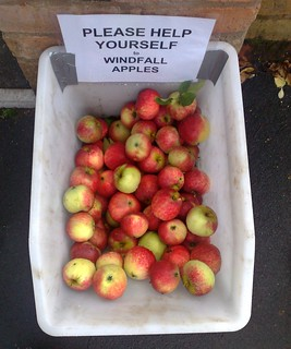 windfall apples on the street