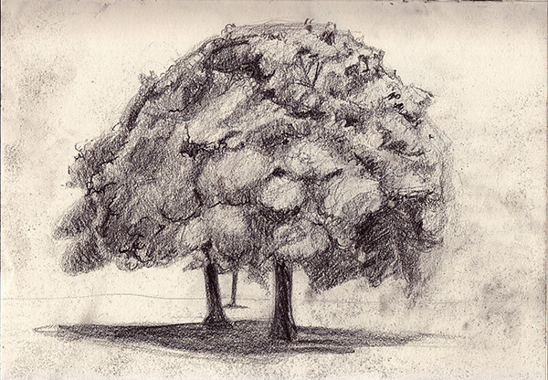 Sketchbook_Tree