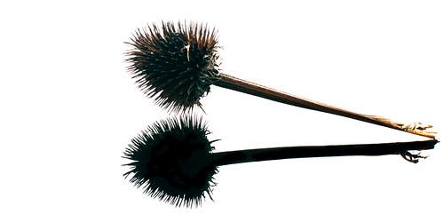 summer flower dead head 365 2012 366 strobist